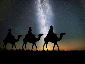 camels-1150075_960_720